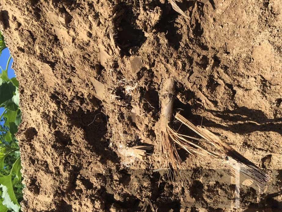 Fuzarij-na-ostankih-rastlin-v-zemlji-1024x768
